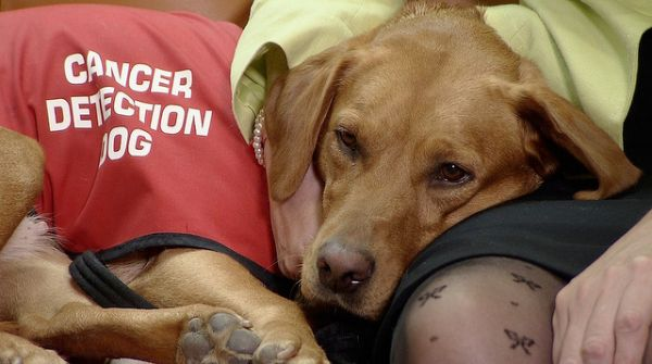 Trained Dogs Are Nearly Perfect Detectors of Prostate Cancer.
