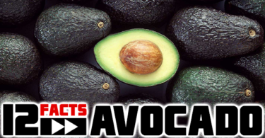 avocado-interesting-facts