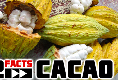cacao facts